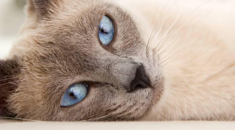 Cegueira em gatos